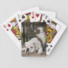 English Bulldog Puppy Playing Cards