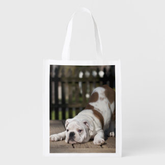 English bulldog puppy stretching down. reusable grocery bag