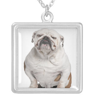 English Bulldog, sitting in front of white Silver Plated Necklace