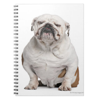 English Bulldog, sitting in front of white Spiral Note Books