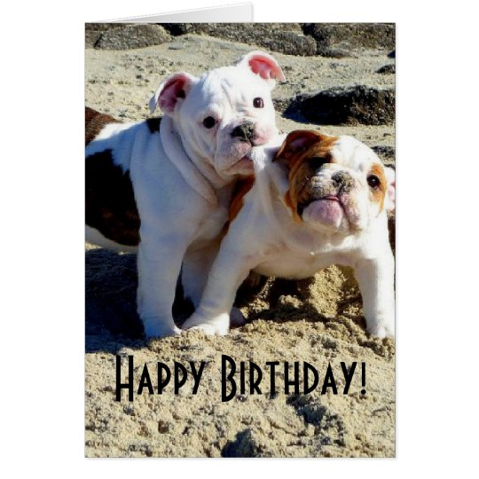 English Bulldogs Puppy Love Birthday Card