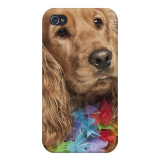 English Cocker Spaniel (10 months old) Case For The iPhone 4