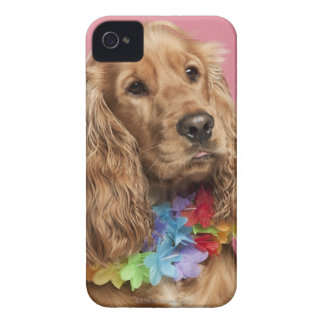 English Cocker Spaniel (10 months old) Case-Mate iPhone 4 Case