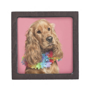 English Cocker Spaniel (10 months old) Premium Keepsake Box