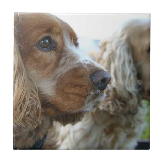 English Cocker Spaniel Tile