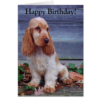 English Cocker Spaniels Birthday Card