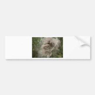 English dandilion clot bumper sticker