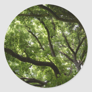 English Forest Canopy Round Sticker