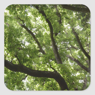 English Forest Canopy Square Stickers
