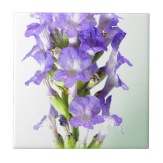 English Lavender Flower Photo Tile