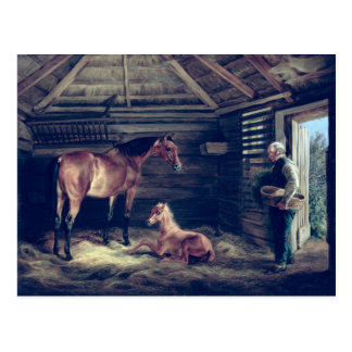 English Mare With Her Foals, 1833 Post Card