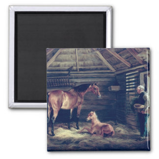 English Mare With Her Foals, 1833 Square Magnet