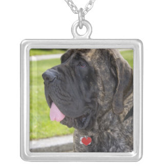 English Mastif dog in Bryon, Ohio. Silver Plated Necklace