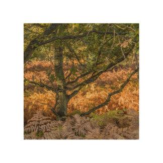 """English oak"" design wall art"