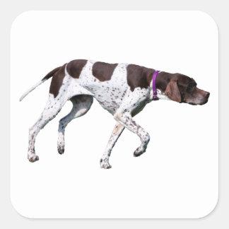 English Pointer dog beautiful photo, gift Square Sticker