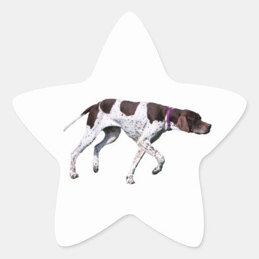 English Pointer dog beautiful photo, gift Star Stickers