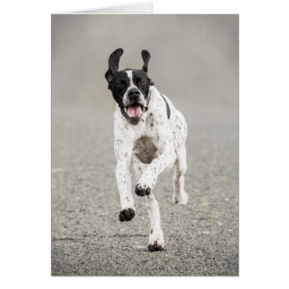 English Pointer Greeting Card