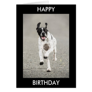 English Pointer Happy Birthday Card