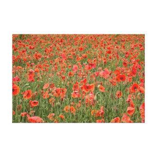English Poppy Field Canvas Print