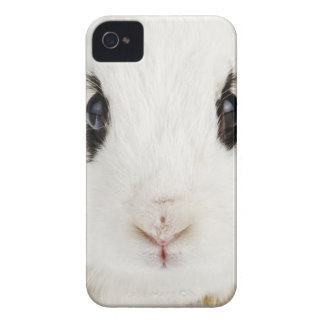 English rabbit Oryctolagus cuniculus iPhone 4 Case-Mate Cases