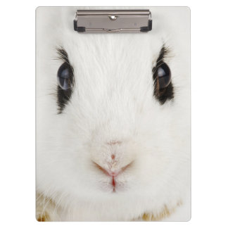 English rabbit (Oryctolagus cuniculus) Clipboard