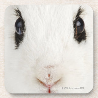 English rabbit (Oryctolagus cuniculus) Coasters