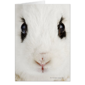 English rabbit (Oryctolagus cuniculus) Greeting Card