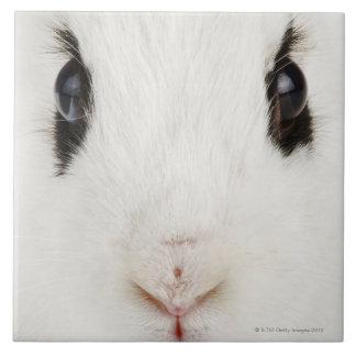 English rabbit (Oryctolagus cuniculus) Large Square Tile