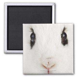 English rabbit (Oryctolagus cuniculus) Magnet