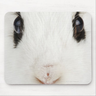 English rabbit Oryctolagus cuniculus Mouse Pads