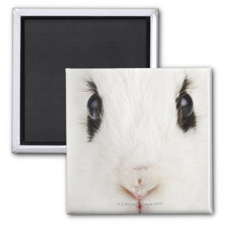 English rabbit (Oryctolagus cuniculus) Square Magnet
