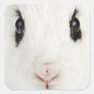 English rabbit (Oryctolagus cuniculus) Square Sticker