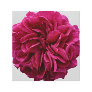 English Red Rose on Wrapped Canvas