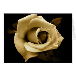 English Rose - Monochrome - Sepia Greeting Card