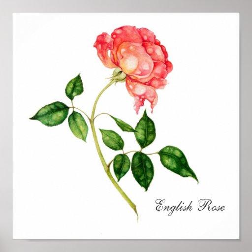 English Rose Poster