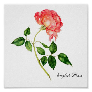 English Rose Posters