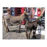 English Scenes, Donkeys in Clovelly, North Devon Post Cards