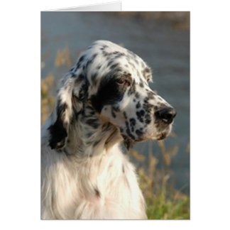 english setter 2.png card