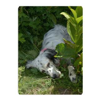 english setter-in bush.png 13 cm x 18 cm invitation card