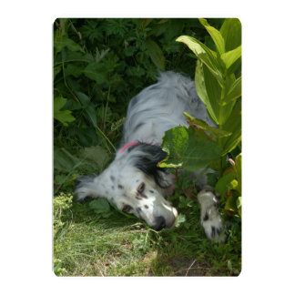 english setter-in bush.png 5x7 paper invitation card