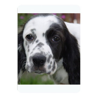 english setter.png 5x7 paper invitation card