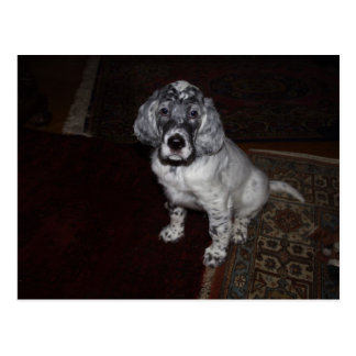 English Setter Post Cards