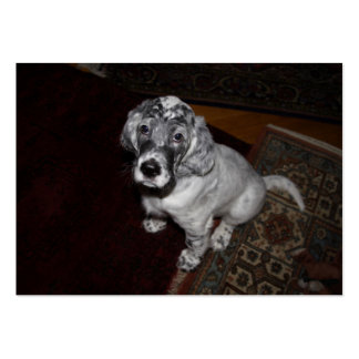 English Setter Puppy Pack Of Chubby Business Cards
