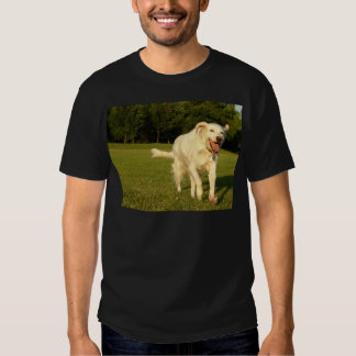 English Setter T-shirts