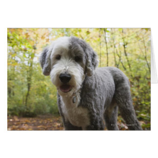 English Sheepdog puppy in forest Card