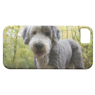 English Sheepdog puppy in forest iPhone 5 Cover