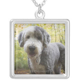 English Sheepdog puppy in forest Silver Plated Necklace