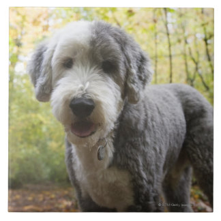 English Sheepdog puppy in forest Tile