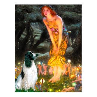 English Springer 7 - MidEve Post Cards
