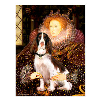 English Springer (Liv) - Queen Postcard